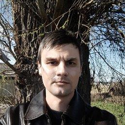 Николай, 36 лет, Воронеж