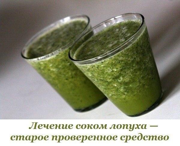 Лечение соком лопуха — старое проверенное средство. В народной медицине соком из свежих листьев ...