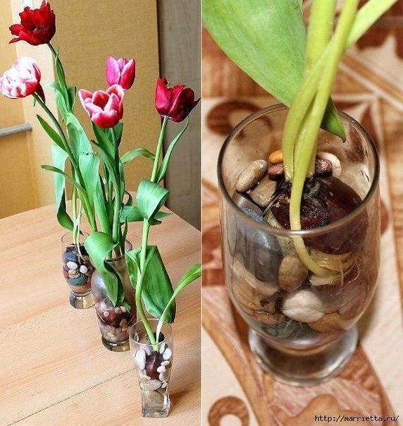 Выращивание тюльпанов в прозрачной вазе.Понадобятся низкорослые сорта. Перед тем, как высаживать ... - 2