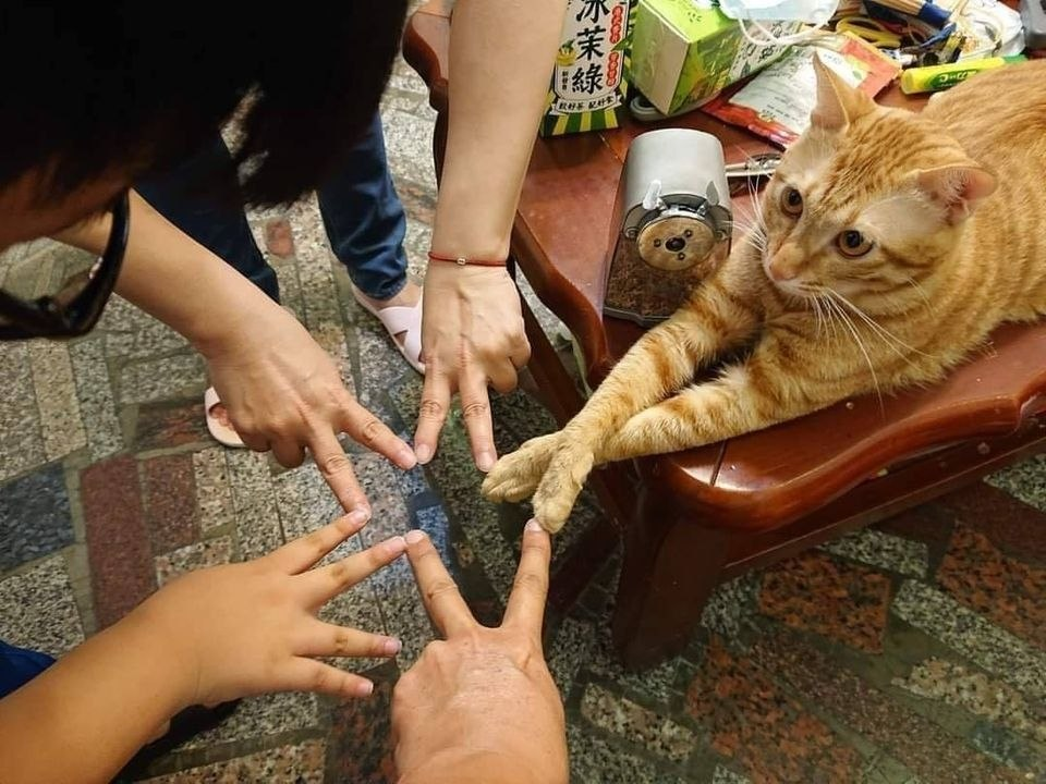 А кот в теме!!!