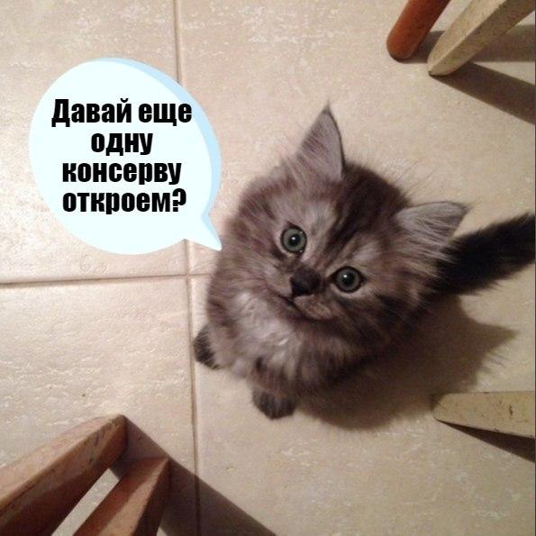 Без кота и жизнь не та - 28 ноября 2020 в 19:11