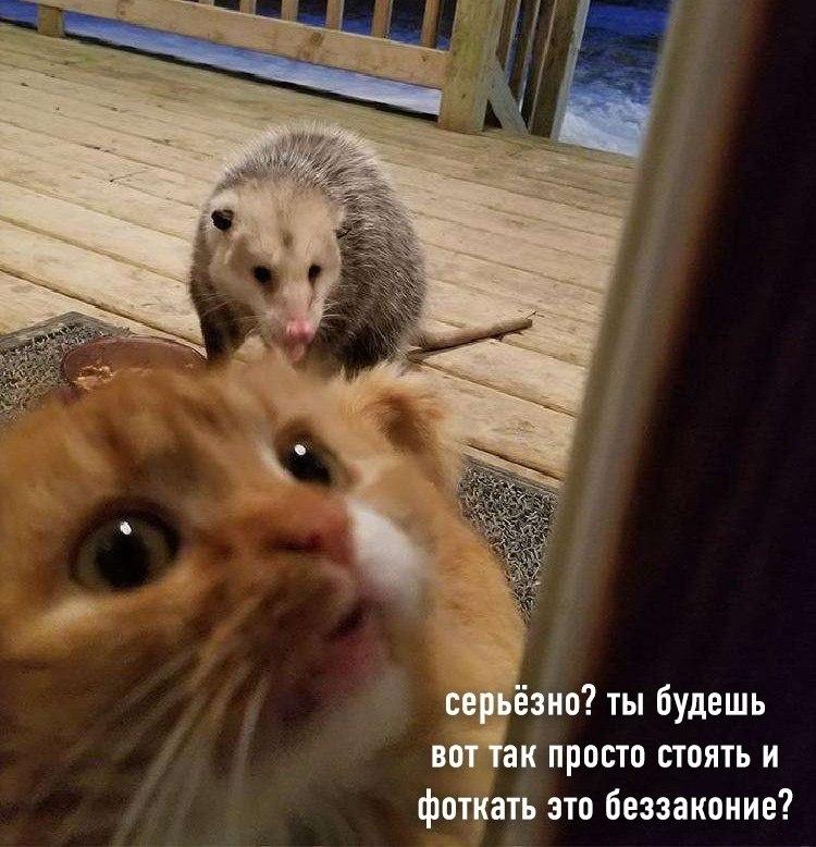 Как разочаровать своего кота. Инструкция. - 4