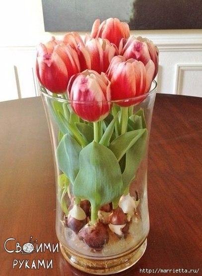 Выращивание тюльпанов в прозрачной вазе.Понадобятся низкорослые сорта. Перед тем, как высаживать ...