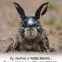 Фото Виктория, Минск, 38 лет - добавлено 9 сентября 2020 в альбом «Коллекция зайцев»