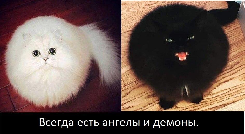Евгений Нелюбим - 9 февраля 2021 в 18:59