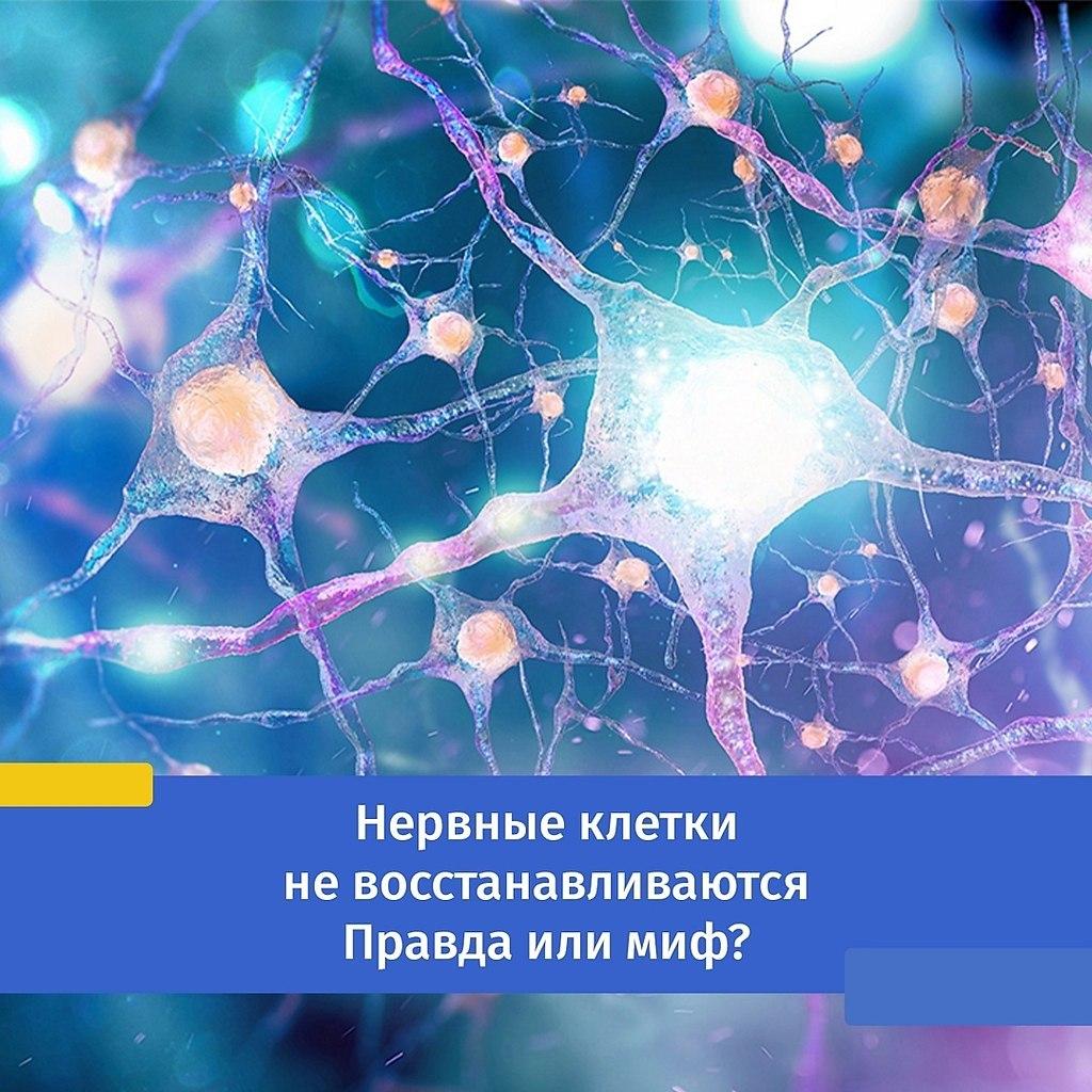 Нервные клетки не восстанавливаются. Правда или миф? Когда мы нервничаем, близкие пытаются нас ...