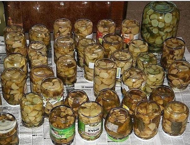 11 заготовок грибов на зиму.Активное время готовки 25 мин. время на засолку1. Засолка грибов - ... - 4