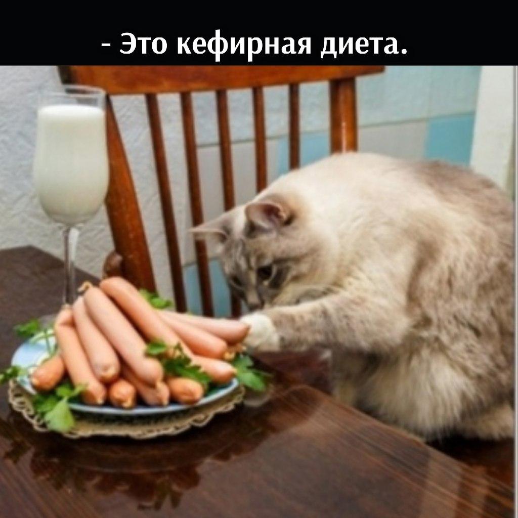 Без кота и жизнь не та - 11 июля 2021 в 22:26 - 2