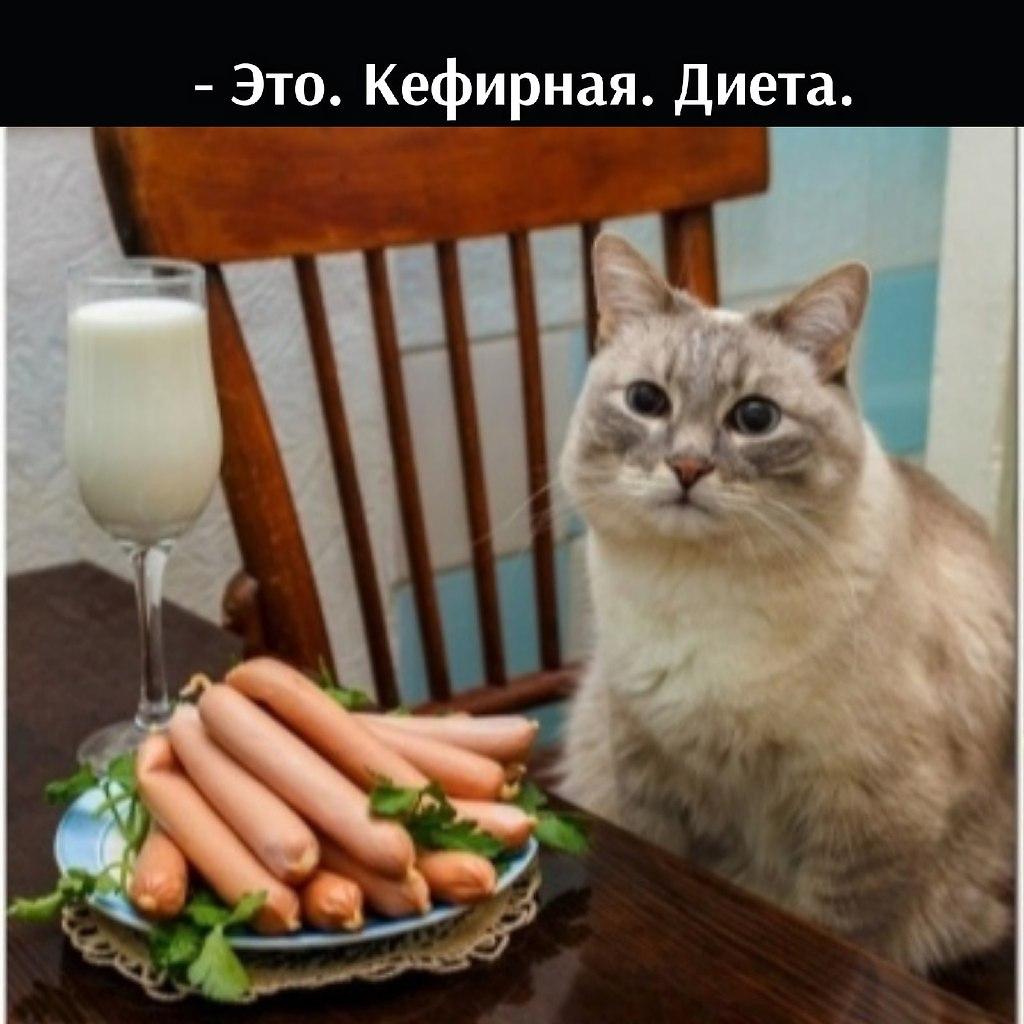 Без кота и жизнь не та - 11 июля 2021 в 22:26 - 4