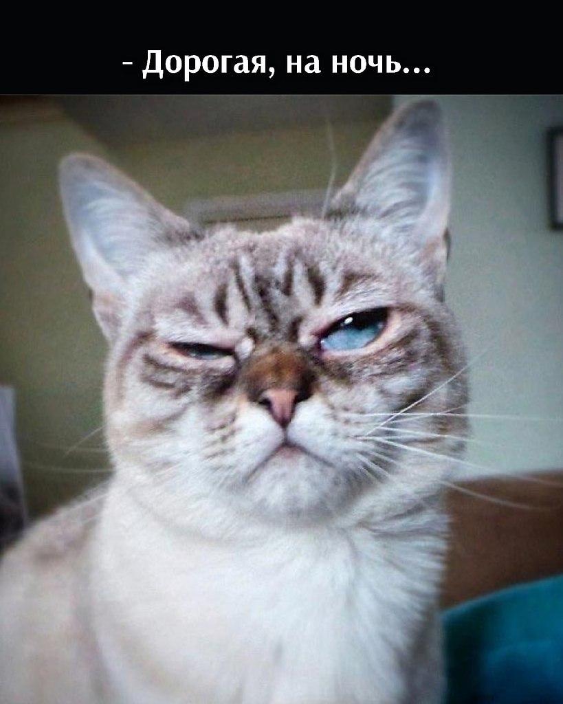 Без кота и жизнь не та - 11 июля 2021 в 22:26