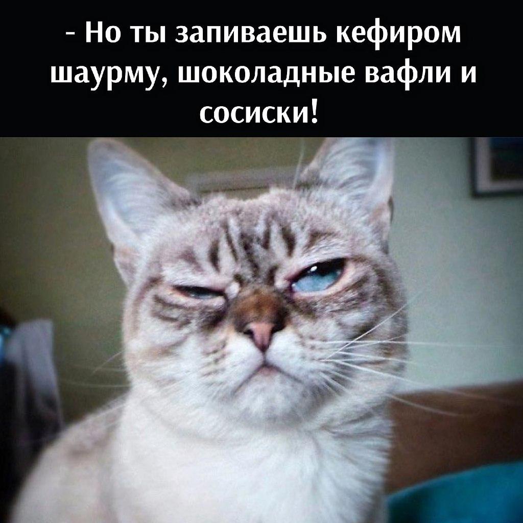 Без кота и жизнь не та - 11 июля 2021 в 22:26 - 3